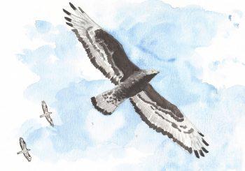 dessin-#30-bondrée-header