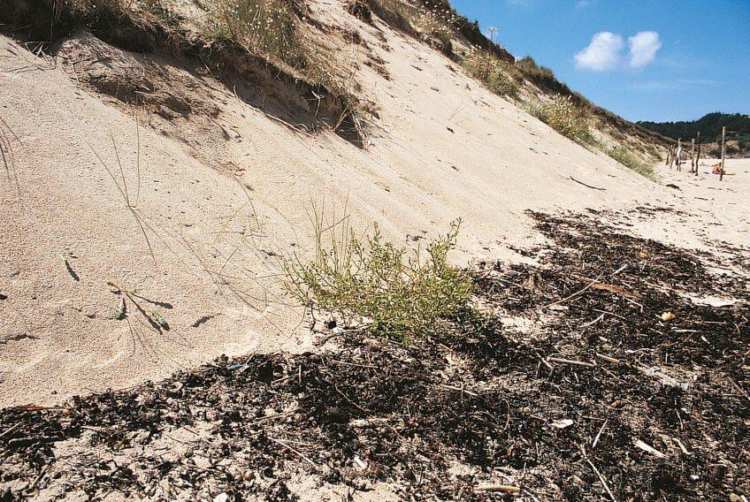 De dune en dune - La Salamandre