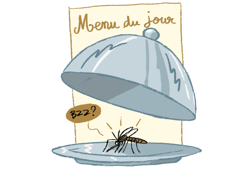 Illustration montrant un menu du jour : un moustique