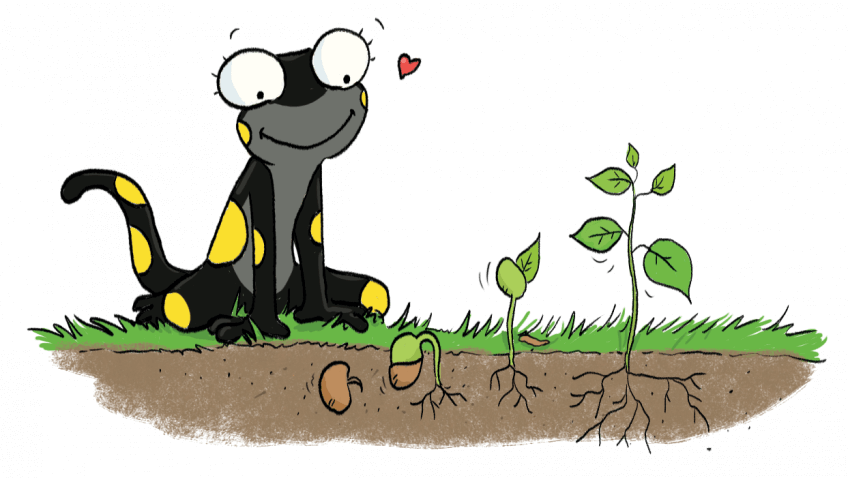 Illustration d'une salamandre regardant pousser des plantes.