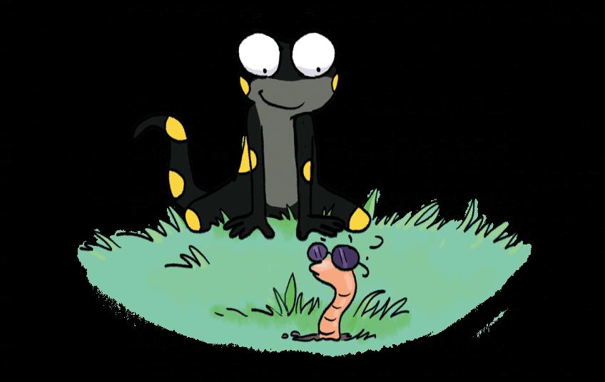 Illustration d'un ver de terre, observé par la salamandre