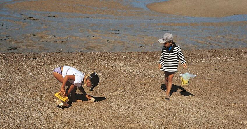 Les dons de la marée - La Salamandre