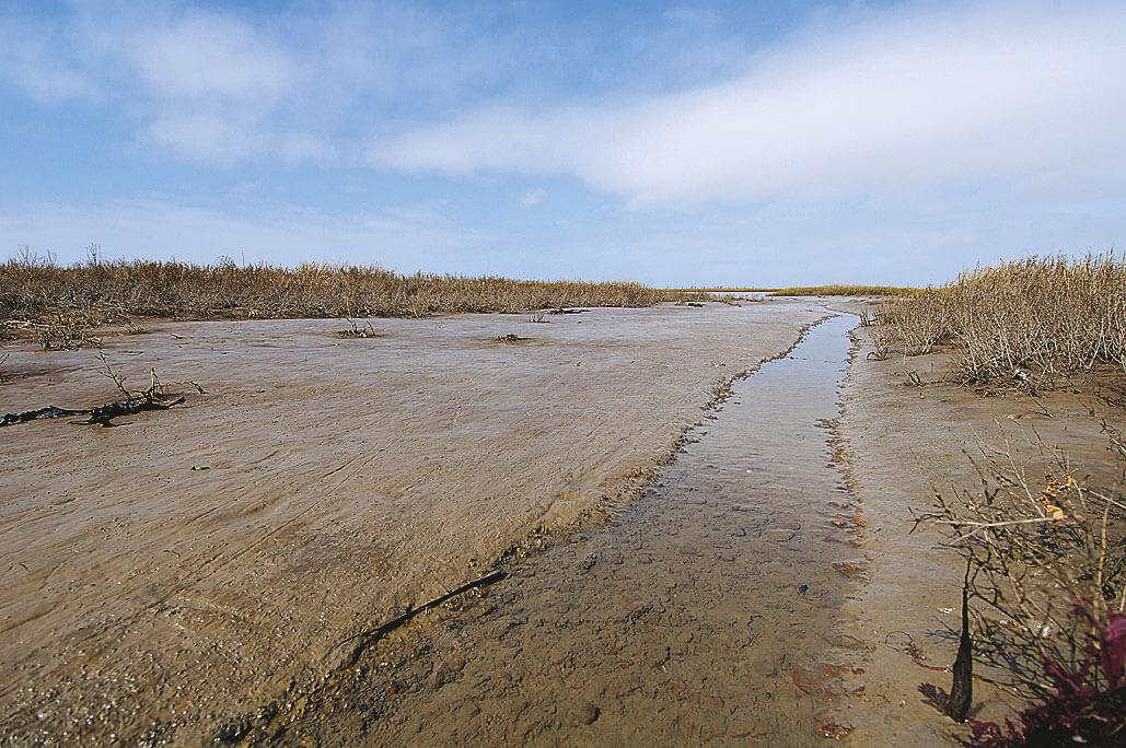 Fleurs de sel et plantes des marais - La Salamandre