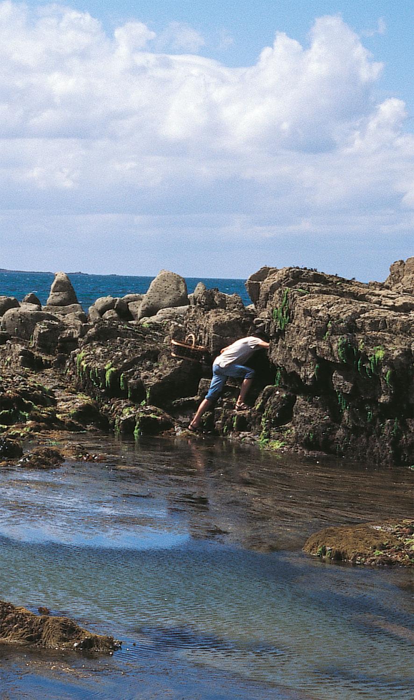 Oiseaux marins, arpenteurs de pierres - La Salamandre