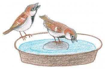 Abreuvoir pour oiseaux