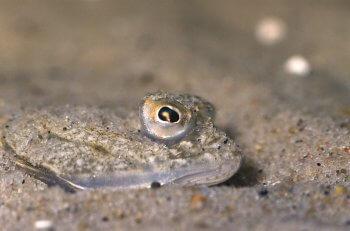 La vase pleine de vie - La Salamandre