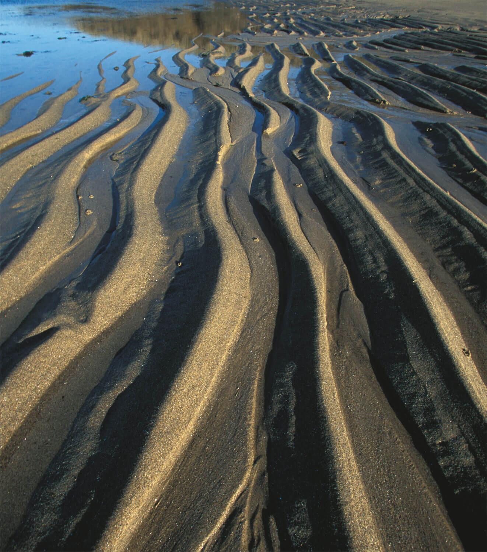 L'étonnante variété des animaux qui vivent dans le sable