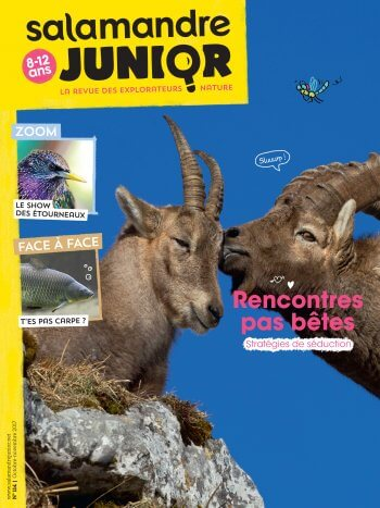 Couverture de La Salamandre Junior n°114