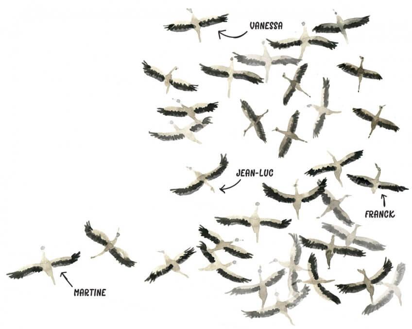 Groupe de cigognes