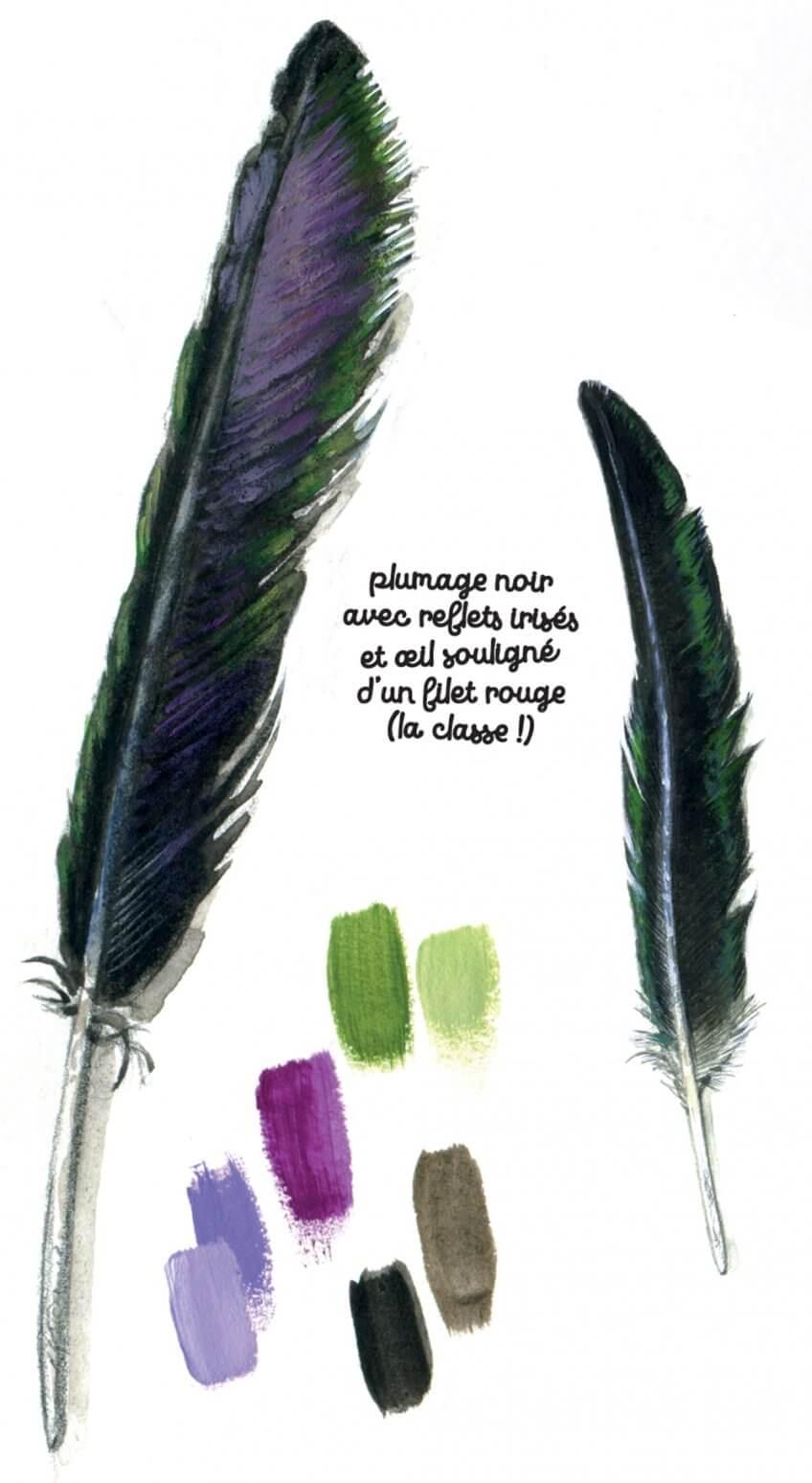 Plume cigogne noire