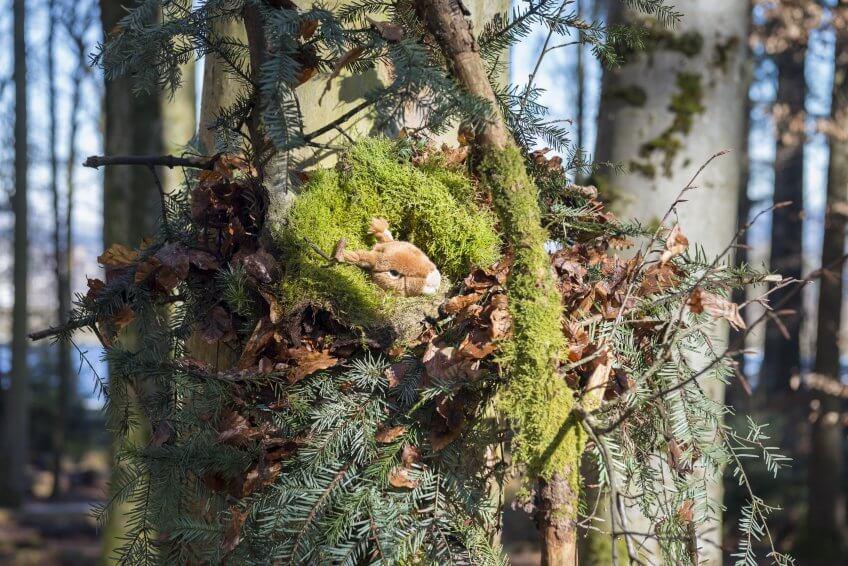 Une hotte d'écureuil.