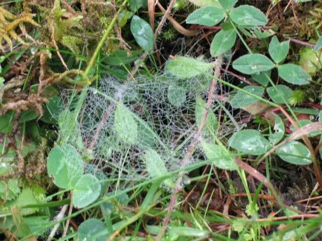 Une toile d'araignée.