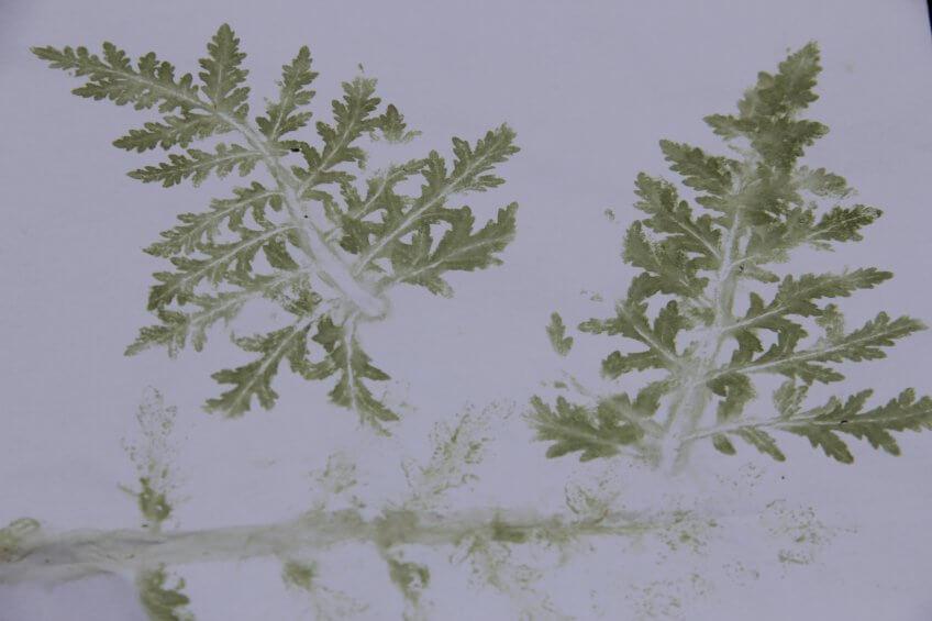 Des plantes imprimé sur du papier.