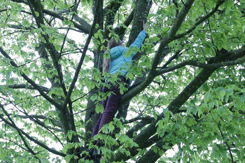 Un enfant escalade un arbre.