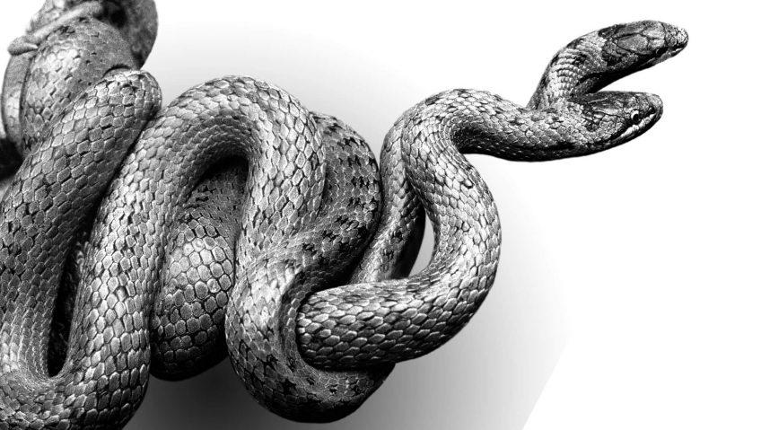 Reproduction animale : Leçon N° 1 : Etre bien équipé - La Salamandre