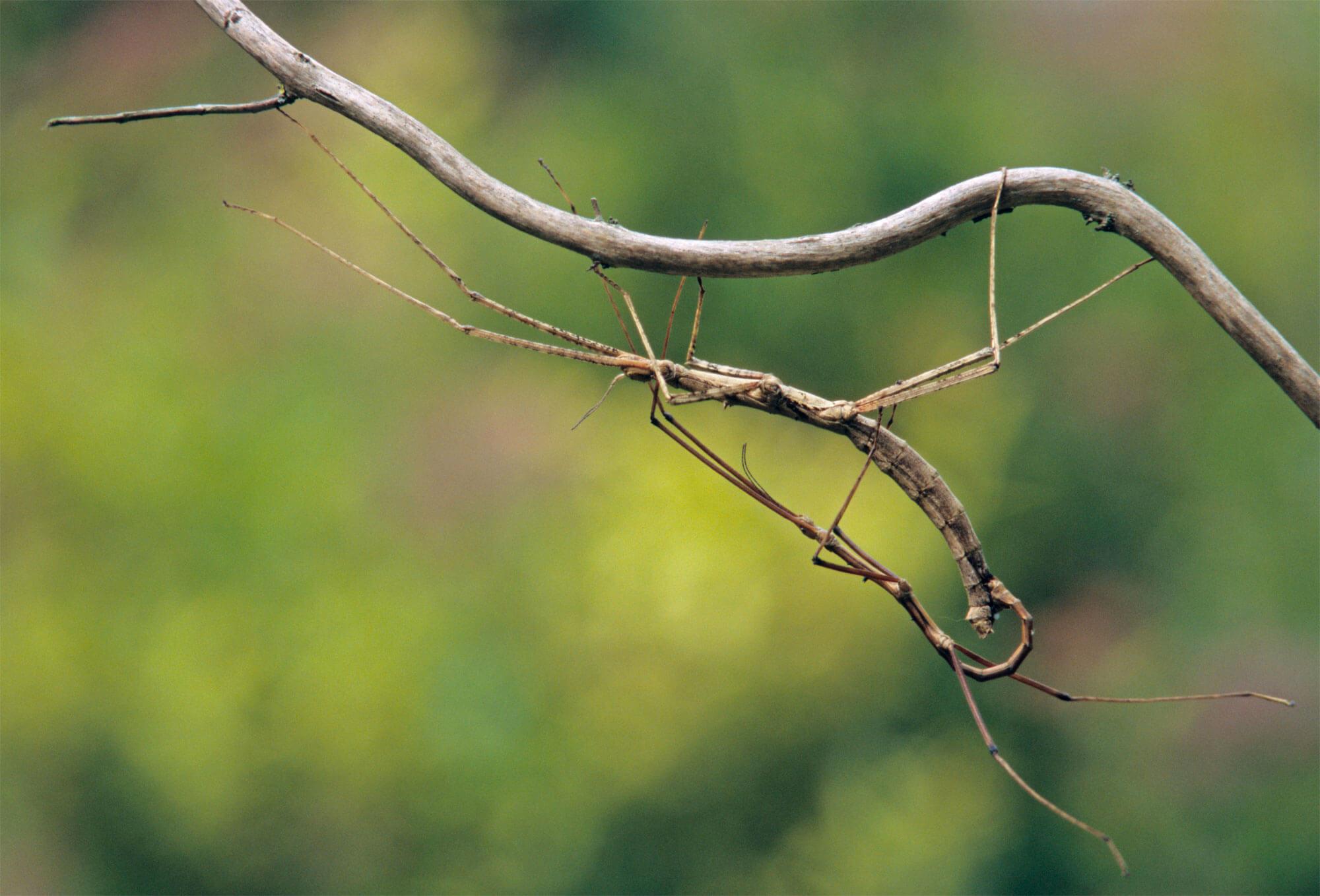 Reproduction animale : Leçon N°6 : Tout miser sur un coup - La Salamandre