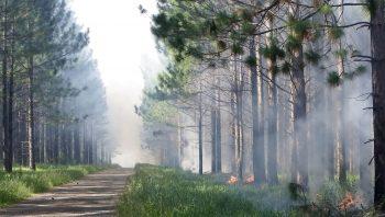Dangereux et incontrôlable, le feu est actuellement le seul phénomène qui compense la fermeture des milieux naturels liée à l'exode rural.