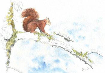 dessin-#35-écureuil