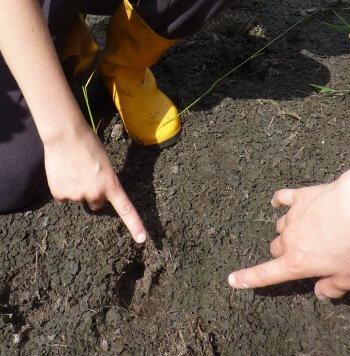 Moulez des traces d'animaux - La Salamandre