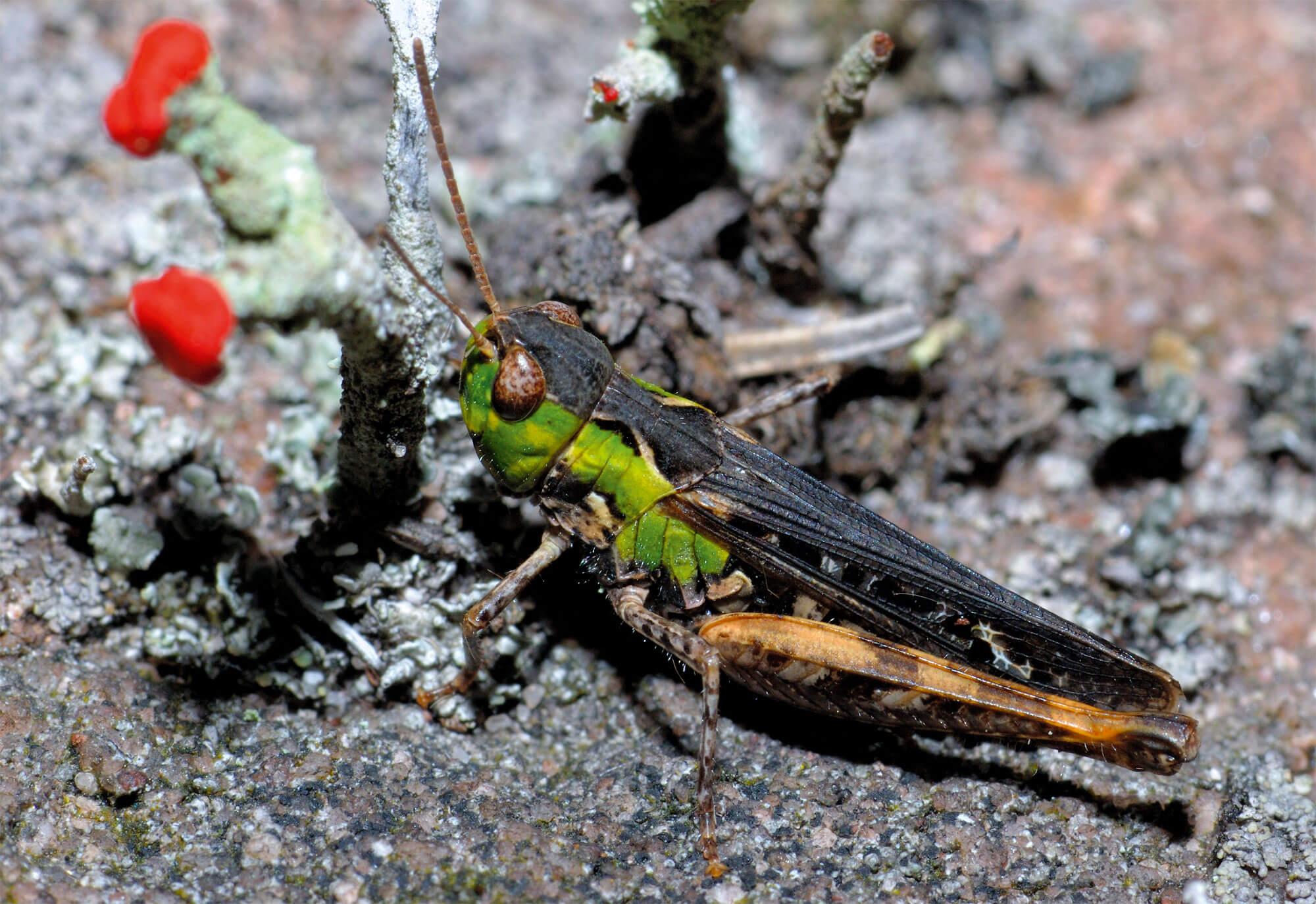 Séduire pour conclure - La Salamandre