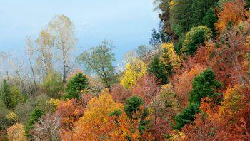 Pourquoi les sapins ne perdent-ils pas leurs aiguilles en automne? - #1