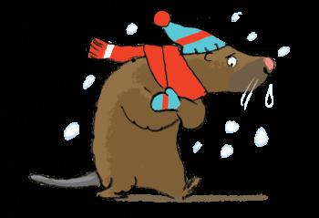 Le ragondin en hiver