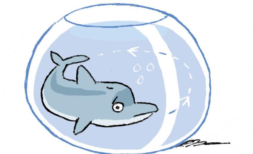 Un dauphin dans un bocal