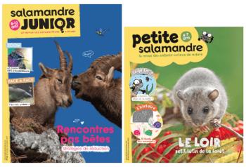 Salamandre Junior n° 114 et Petite Salamandre n° 14