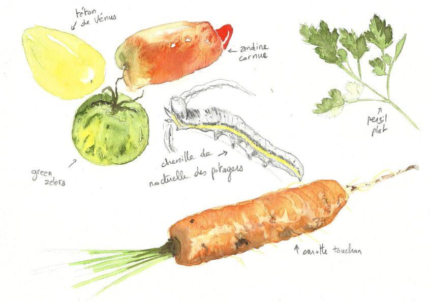 Biodiversité ou bonne bouffe - La Salamandre