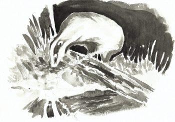 dessin-#38-blaireau