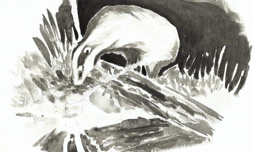 Un blaireau dans la mare - La Salamandre