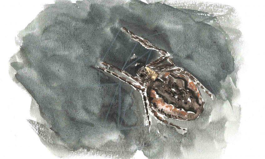 Même pas peur de l'araignée - La Salamandre