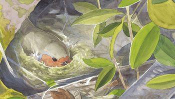 En nichant au sol, le rougegorge s'expose à tous les dangers.