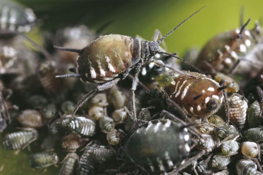 Un élevage de coccinelles aujourlejour - La Salamandre