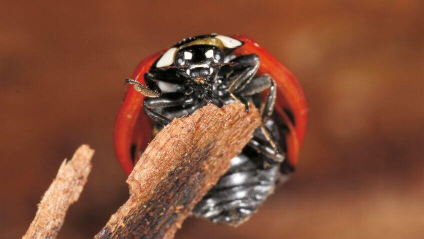 La course aux pucerons - La Salamandre