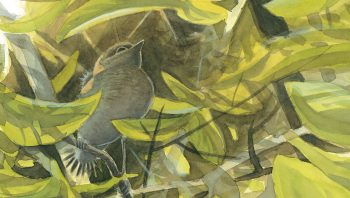 Le plumage des jeunes rougegorges brun foncé perlé de clair est une tenue de camouflage idéale dans un sous-bois.
