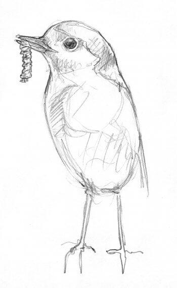Bouchées doubles pour le rougegorge - La Salamandre