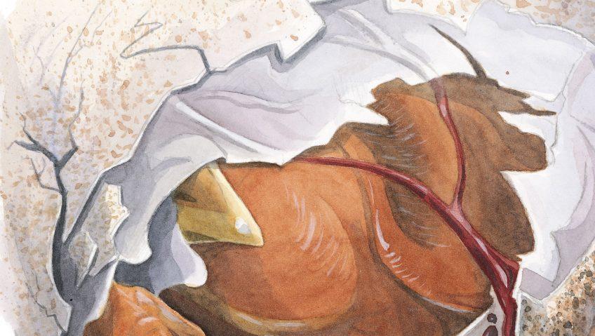 Rougegorge : Un diamant pour naître - La Salamandre