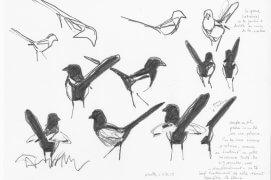 Couple au sol, queues dressées le plus souvent. Tout en cherchant leur nourriture, les pies poussent de petits cris. L'une d'entre elles n'a de cesse d'entrouvrir latéralement – et très brièvement – les ailes. Nantes, 11 mars 2015, barre de graphite sur papier Canson.