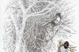 Construction d'un gros nid en phase terminale... A moins qu'une tempête printanière n'oblige les oiseaux à consolider l'ouvrage ou les pousse à en construire un autre. Nantes, 13 mars 2015, crayon graphite et aquarelle sur papier Canson.