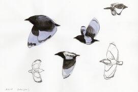 Depuis quelques jours, j'aperçois de plus en plus de familles en vadrouille. De temps en temps, la silhouette surprenante d'un jeune oiseau sans queue passe devant mes pinceaux. (près de Saint-Nazaire, 15 juin 2015 | Crayon graphite et aquarelle sur papier Canson)