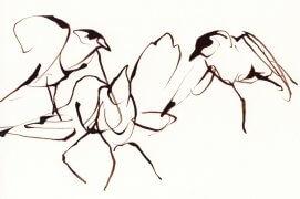 Tandis que l'adulte prospecte activement la pelouse pour nourrir sa progéniture les jeunes s'amusent, se taquinent, tracent dans l'espace des virevoltes magnifiques. Impressions fugaces ; petits croquis rapides repris à l'encre brune et à main levée pour retrouver cette fluidité. La Salamandre l'a choisi pour illustrer la couverture du no. 243 - L'affaire pie bavarde. Nantes, 14 juin 2015.