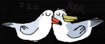 Mouette et goéland