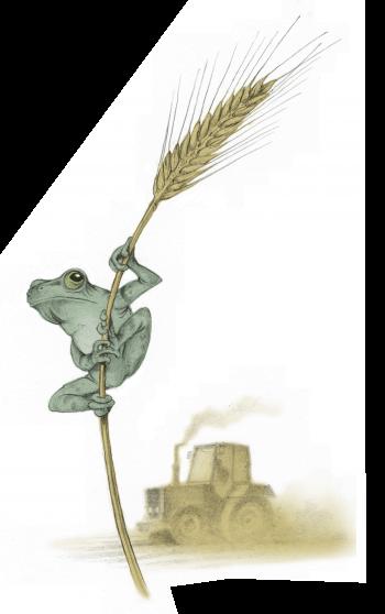 Il y a 150 ans mourait le Grand Marais - La Salamandre