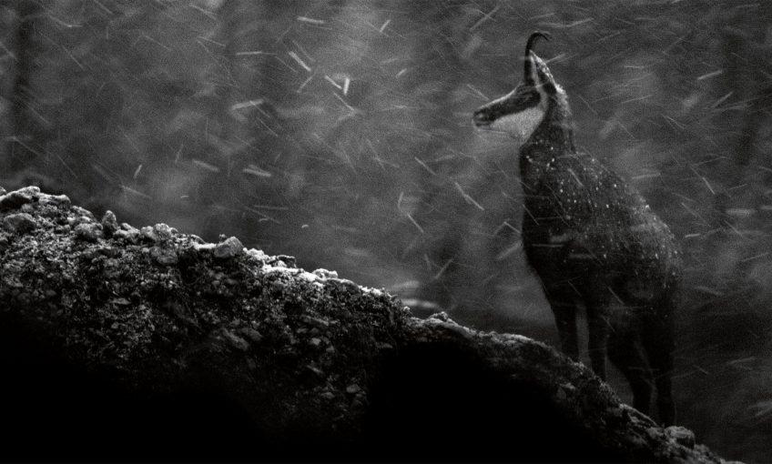Le calme dans la tempête - La Salamandre