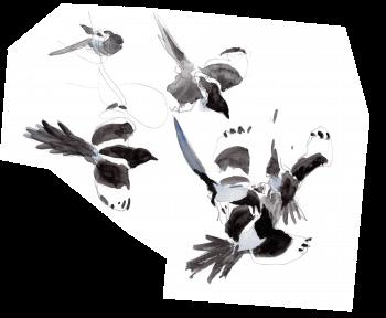 Congrès d'agasses - La Salamandre