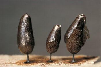Délirant - La Salamandre