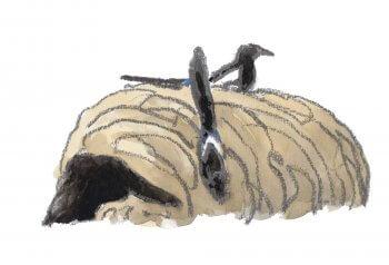 Guerre et pie - La Salamandre