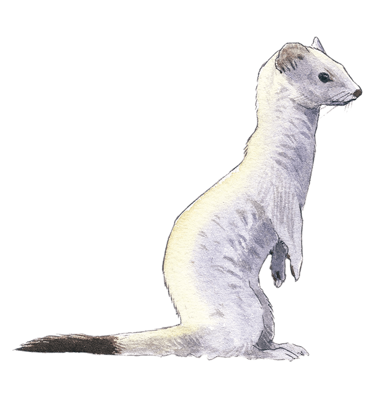 Blanche ou pas - La Salamandre