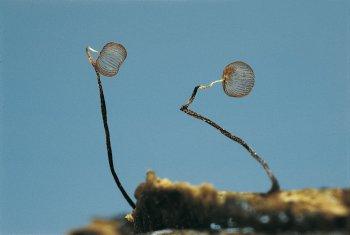 Omniprésent - La Salamandre